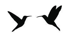 Couple In Love Hummingbird Vector Silhouette Illustration Isolated On White Background. Tropical Little Bird Colibri Symbol.Smallest Bird Family.