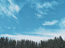 Blue Sky With Clouds And Pine Tree Tops On Below