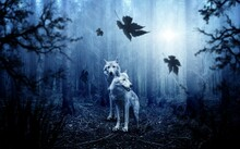 The Wolves At Night