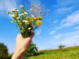 Fototapeta Na sufit - Bukiet polnych kwiatów w dłoni