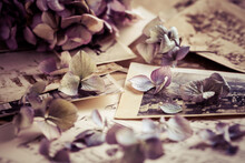 Memories - Old And Antique Family Photos  Dated 1930 With Old Photo Album And Dried Flowers