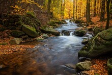 Autumn Bach Stream Brook Rocks Trees Woods