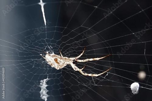Photo Araignée sur sa toile dans le jardin