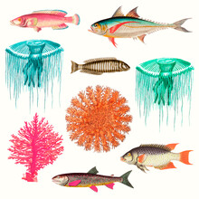 Vintage Marine Life Illustration Set Remixed From Public Domain Artworks