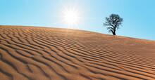 Silhouette Of Dry Tree In Desert Of San Dune At Sunset