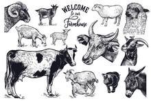 Vintage Engraving Farm Animals Set.