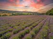 Leinwandbild Motiv Lavendelfeld in Deutschland Lipperland