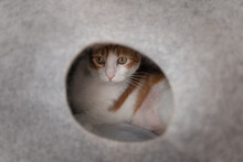 Brown And White Cat With Yellow Eyes Hiding Inside A Cat Bed. Close Up