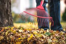 Raking Leaves From Lawn In Garden. Rake Closeup. Gardening In Fall Season