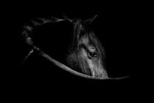 Fine Art Black Horse Portrait Low Light Beautiful Background Or Print