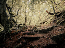 Mystical Forest Pathways And Moss Covered Trees. The Magical Forest Path Ways And Moss Covered Trees Conjures A Mystical Dream Like Image Of Nature.
