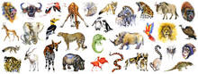 Realistic African Animals Watercolor Collection Isolated On White. Wild Nature. Wildlife. Tropical Fauna.