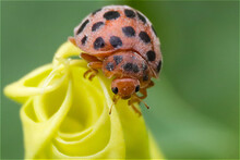 Macro Photography Funiu District Of Western Henan Insects