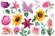 Set Of Bright Flowers On An Isolated White Background, Botanical Elements For Design, Watercolor Painting