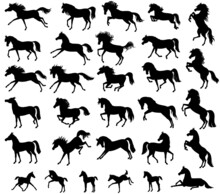 Set With Horse Silhouettes. Vector Illustration. Horses For Logos. Vector Isolated Illustration