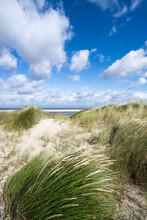 European Beachgrass On A Windy Day Near The Dune Beach