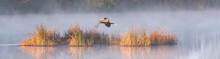 Great Blue Heron Panorama In Fog