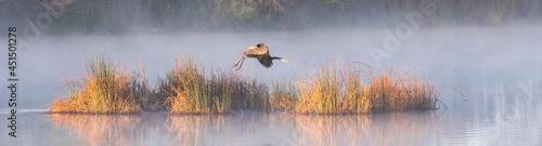 Fotografie, Obraz Great Blue Heron Panorama in Fog