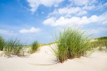 Beachgrass On The Dune Beach