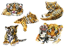 Cute Baby Cub Tigers Watercolor Illustration. Set Of Happy New Year 2022. Chinese New Year. The Year Of The Tiger.