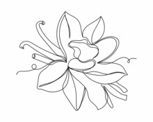 Continuous One Line Drawing Of Dried Vanilla Sticks An Orchid Vanilla Flower In Silhouette On A White Background. Linear Stylized.Minimalist.