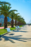 The modern resort town of Georgia Batumi. A neat line of palm trees on the embankment
