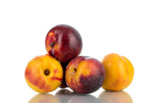 Two Juicy Ripe Nectarines And Two Plums, Close-up, Isolated On White.