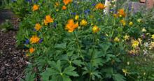 Wild Flowers Of Colorado Higher Climates