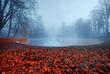 Jesień park Pszczyna w mglisty poranek