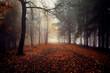 Mgła w lesie, jesienny krajobraz