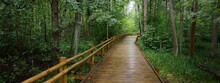 Modern Wooden Winding Pathway (boardwalk) Through Green Deciduous Trees In Public Park (forest). Rainforest, Ecology, Environmental Conservation, Ecotourism, Recreation, Cycling, Nordic Walking