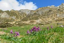 Montagnes Enneigées Pyrénées