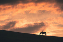 Horse Grazes On The Hill At Sunset. Gil-Su Valley In North Caucasus, Russia. Beautiful Autumn Landscape.