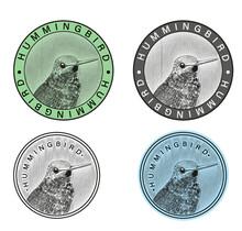 Logotipo De Colibrí Con Cuatro Variantes De Color