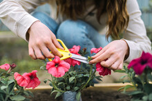 Woman  Planting Flower In A Flower Pot