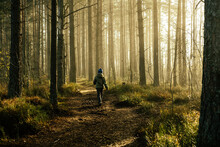 Boy In A Jacket Walking Through The Pine Forest In The Morning.