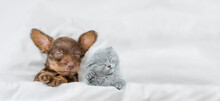 Cozy Kitten And Dachshund Puppy Sleep Together Under A White Blanket On A Bed At Home. Top Down View