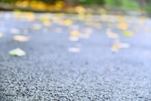 싱그러운 싱그러움 상쾌한 상쾌함 여름 비온뒤 비오는날 촉촉함 아스팔트 거리