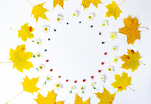 Round Frame From Yellow And Faded Brown Autumn Leaves Of Maple,  Fresh Yellow Chrysanthemum Flowers, Rowan Berries And Wild Grapes Isolated On White Background.