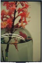 Flower On Vase