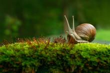 Snail On A Garden Background