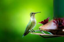 Beautiful Green Hummingbird Sitting On A Hummingbird Feeder