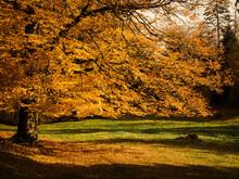 Tree With Autumn Foliage