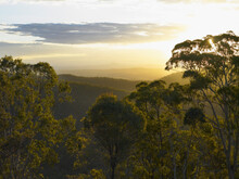 Looking Over The Top Of Gumtrees Towards The Main Divide From The Top Of Mount Tambourine At Sunset