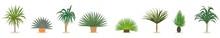 Yucca Plant Vector. Set Of Yucca Plant Cartoon Icon Design Template With Various Models.