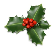 3d Realistic Vector Christmas Mistletoe Isolated On White Background.