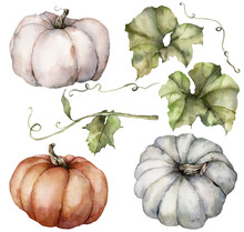 Watercolor Autumn Set Of Pumpkins And Leaves. Hand Painted Blue, Red And Orange Gourds Isolated On White Background. Botanical Illustration For Design, Print, Background.