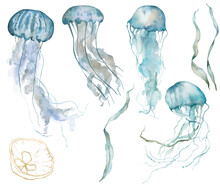 Watercolor Tropical Set Of Blue Jellyfishes, Gold Linear Shell And Laminaria. Underwater Animals And Plant Isolated On White Background. Aquatic Illustration For Design, Print Or Background.