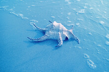 Pop Art Style Blue Colored Chiragra Spider Conch Shell Isolated On The Sand Beach With Sea Foam