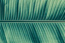 Palm Leaf Texture Background